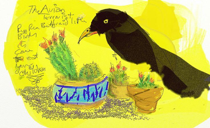 Avian terrorist crow raven currawong