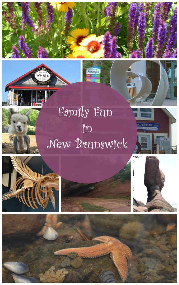 Looking for a great family vacation idea with loads of things to do? Check out all the amazing family friendly activities in New Brunswick Canada!