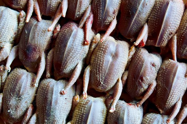 Here it is, dove season again.  Want to try some of these recipes.