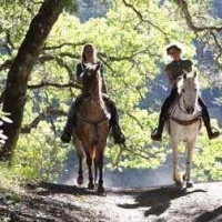 Hunter Valley Horseriding