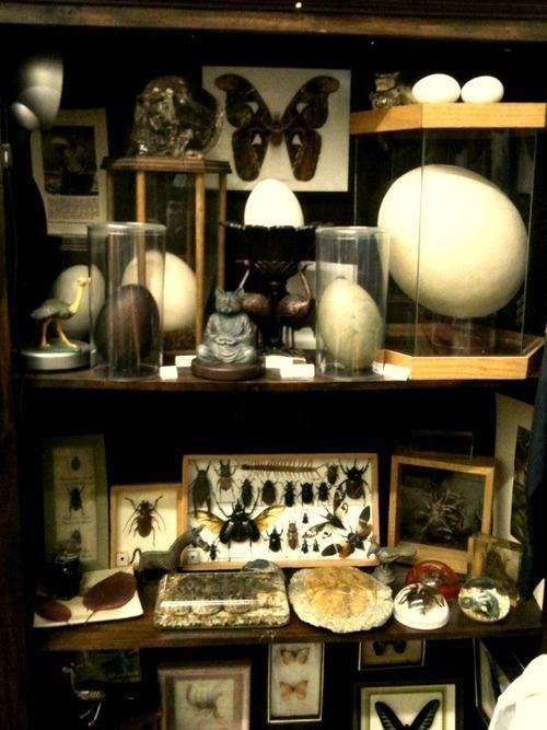 mini museum cabinet of curiosities interiors furniture various items pinterest. Black Bedroom Furniture Sets. Home Design Ideas