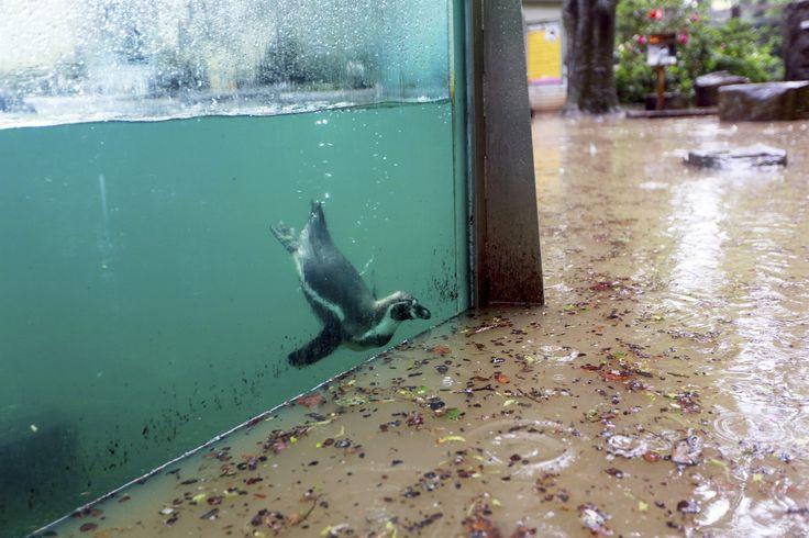 Spodní část pražské zoo zaplavila voda. | na serveru Lidovky.cz | aktuální zprávy