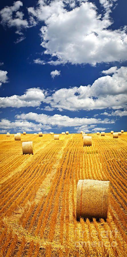 Farm field with hay bales in Saskatchewan: Blue Sky, Hay Bales, Straws Bale, Beautiful, Hay Fields, Country Life, Farms Fields, Photo, Wheat Fields