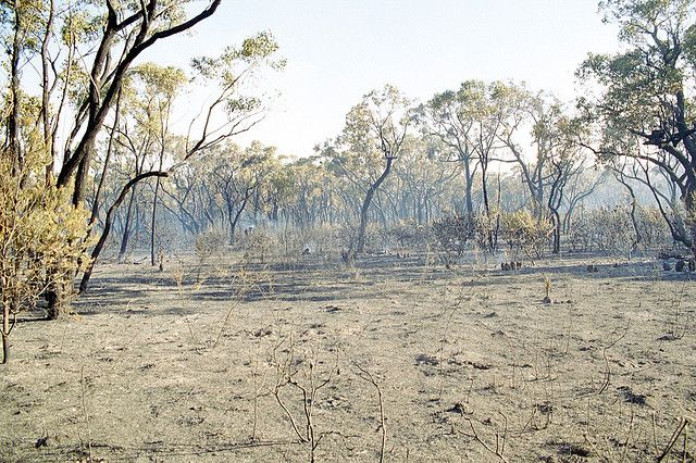 Black Range State Forest south-west of Horsham, Jan 2005. The fire burnt 7,500+ hectares and had a 87km perimeter.