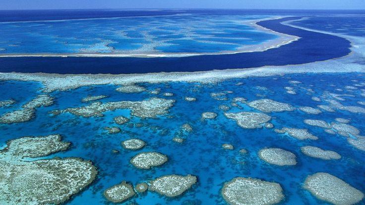 Marea Barieră de Corali, pe cale de dispariţie - http://tuku.ro/marea-bariera-de-corali-pe-cale-de-disparitie/