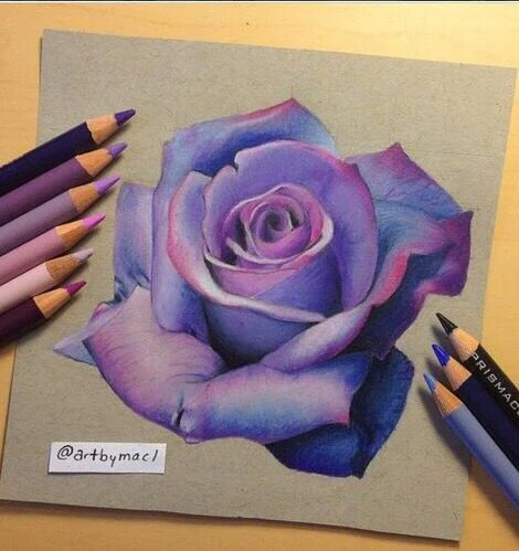 Purple rose colored pencils art