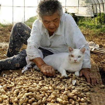 Fukumaru the Cat | photographs of her grandmother, Misao and her beloved cat Fukumaru ...