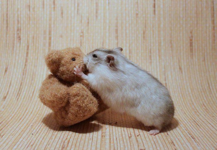 I prefer gerbils, but this is pretty cute