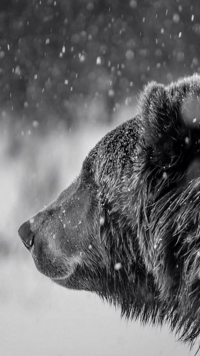 "Bear:  ""Snowflakes that stay on my nose and eyelashes...""  <3"