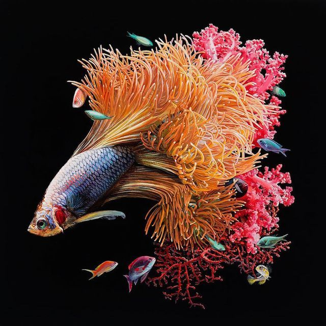 Hyperrealistic Depictions of Fish Merged With Their Coral Envrionments by Lisa Ericson | Colossal | Bloglovin'