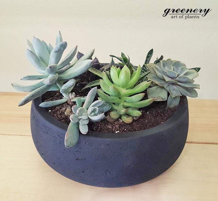 Black centerpiece with succulents! #greenery #pots #planters #airplants #succulents #cactus #plants #chania #greece