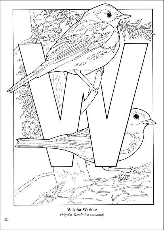 252 best coloriage oiseaux images on Pinterest | Adult coloring ...