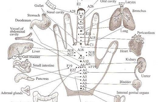 Each Finger Is Tied To Two Organs: This Japanese Method Will Help The Healing In a Few Minutes