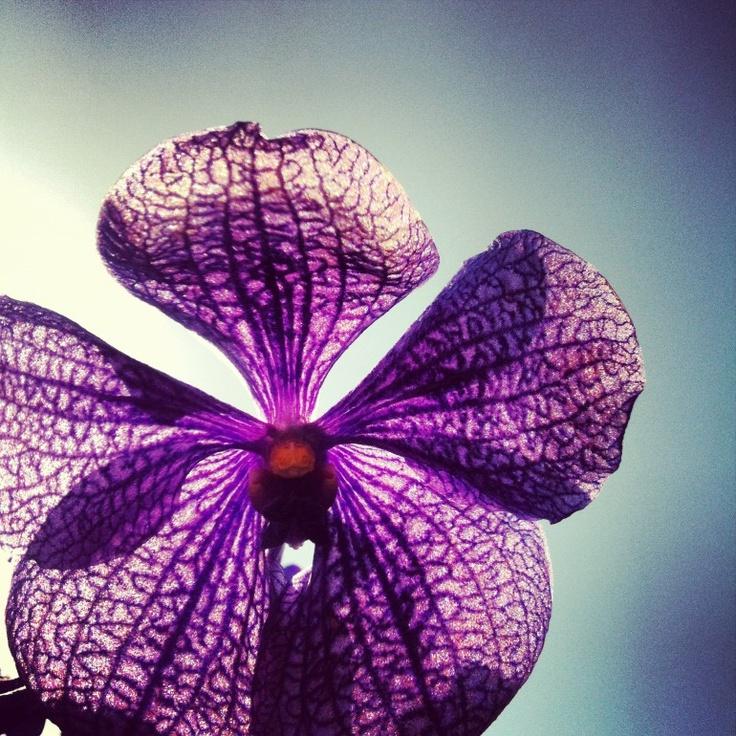 Kleuren  Bloemen, bloemen en nog eens bloemen. door DON FLORITO