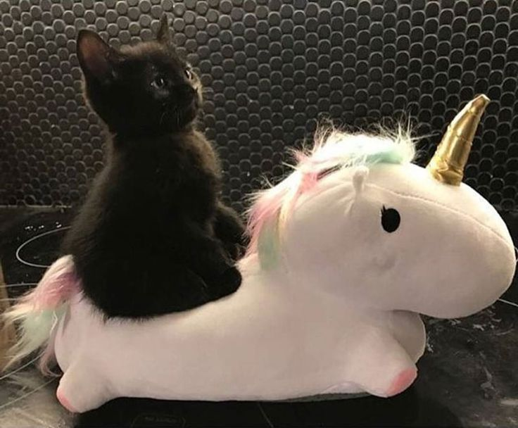 And I looked, and behold a pale horse: and his name that sat on him was Death, and Hell followed with him