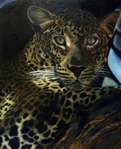 Sonia Sibiet , peintre animalier