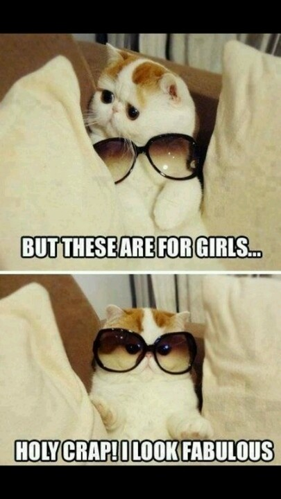 cats and glasses....still considering it!