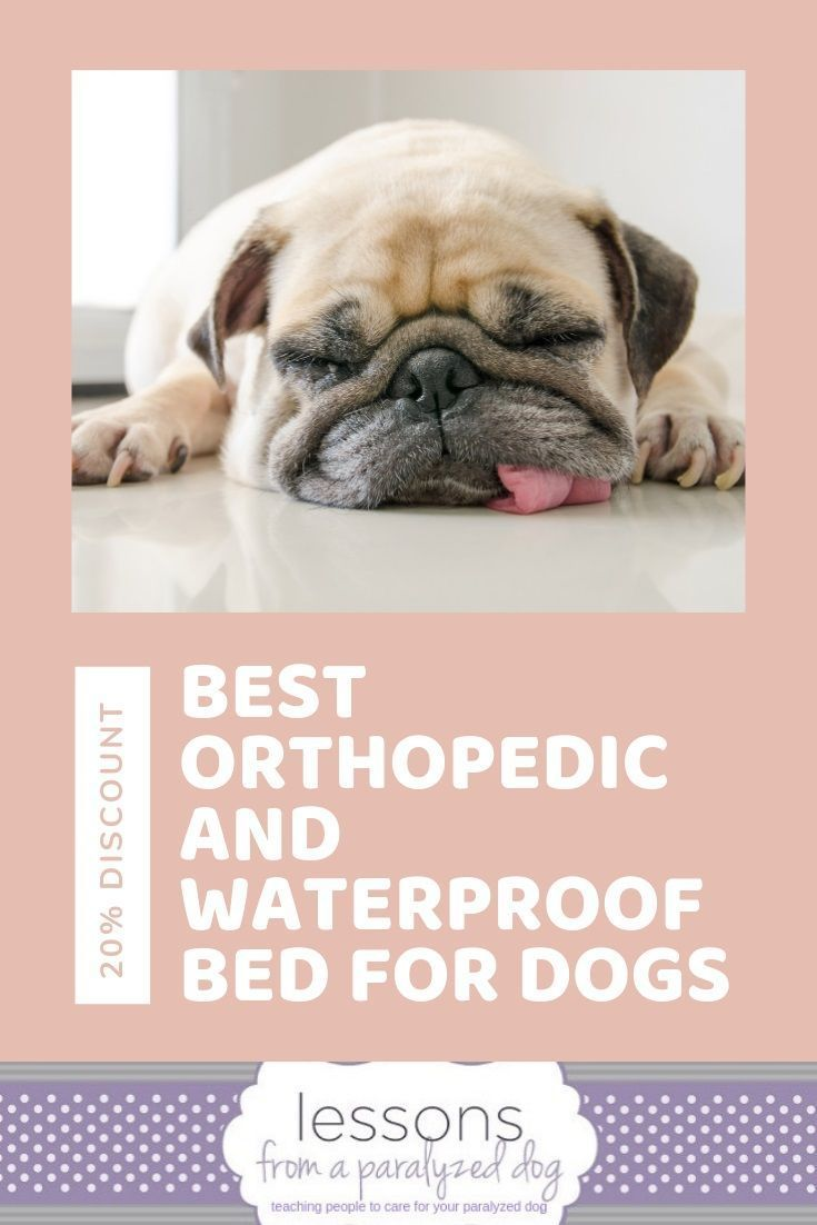 How This Bed Keeps Your Incontinent Dog Dry All Night With Images
