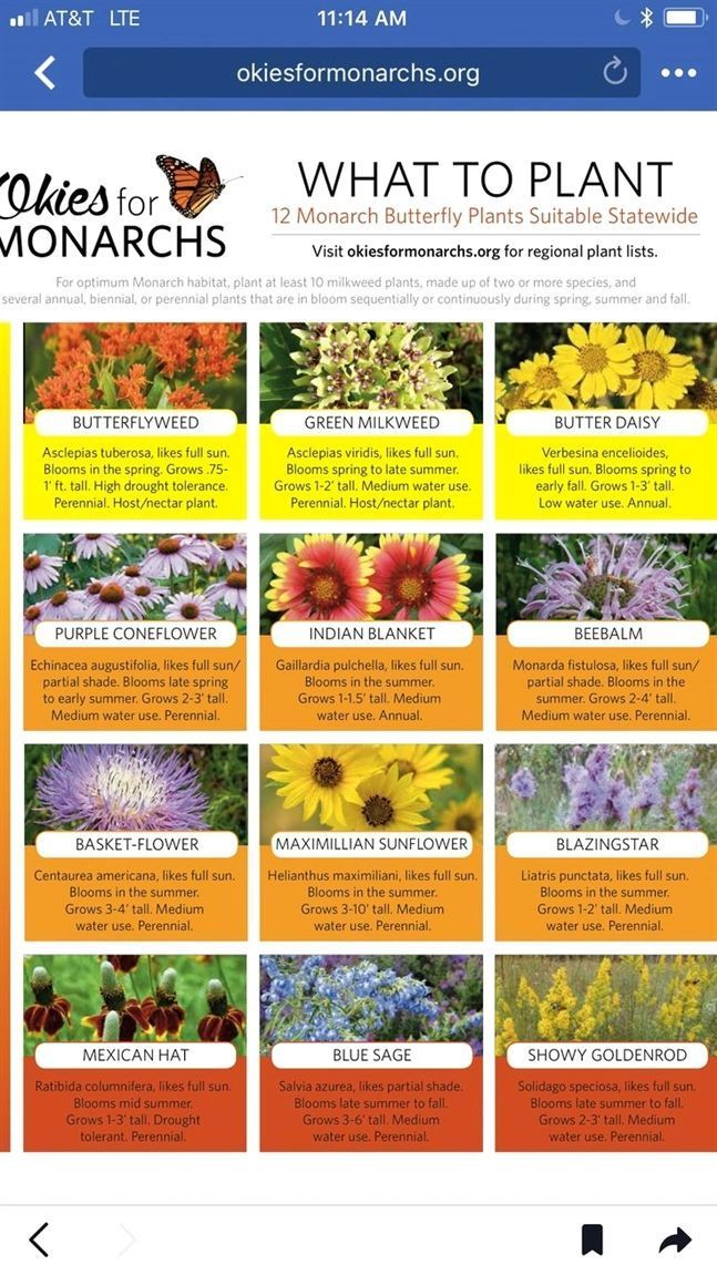 Organic Gardening Seeds Ecosmart Organic Garden Fungicide Best
