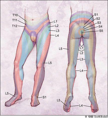 L4 L5 Disc Herniation Symptoms