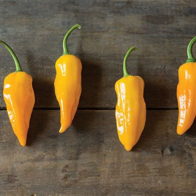 Golden Ghost Pepper Seeds (Capsicum chinense) + FREE Bonus 6 Variety Seed Pack - a $30 Value!