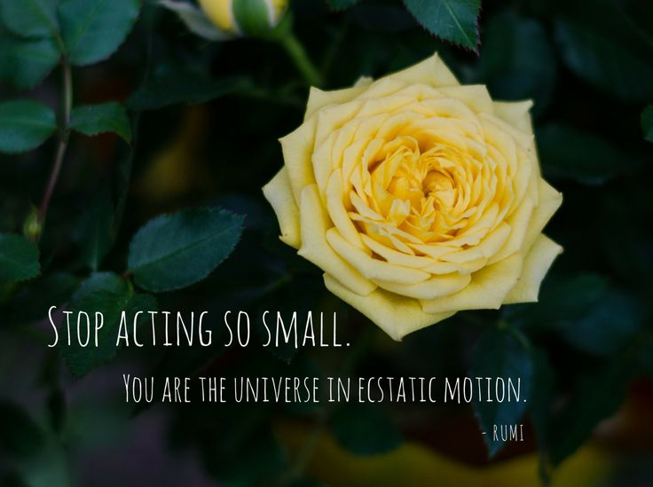 Stop Acting So Small Photo Greeting Card, 4x5 miss you cards blank inside, encouragement care friends love support inspirational, rumi quote by HolgaJen on Etsy