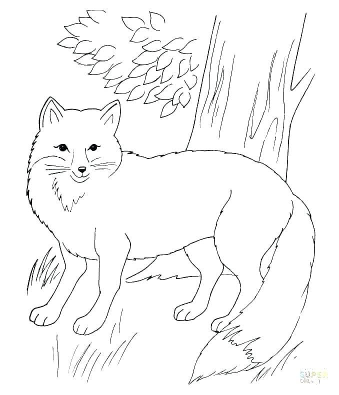 Terry Fox Coloring Pages Fox Coloring Page Super Coloring Pages Unicorn Coloring Pages