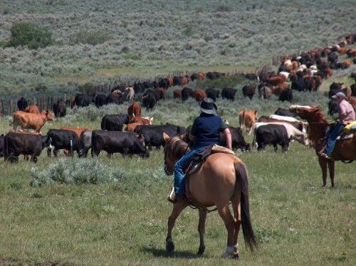 focus ranch a slater wy dude ranch inspected and approved by the dude ranchers