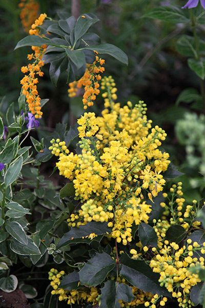 99 best low maintenance plants images on pinterest for Low maintenance year round plants