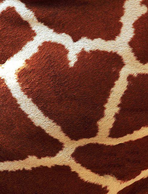 Giraffe Fur.  I Heart You by Erin Gardner