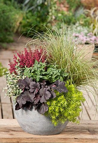 Potted arrangement - Varied heights, colors and textures