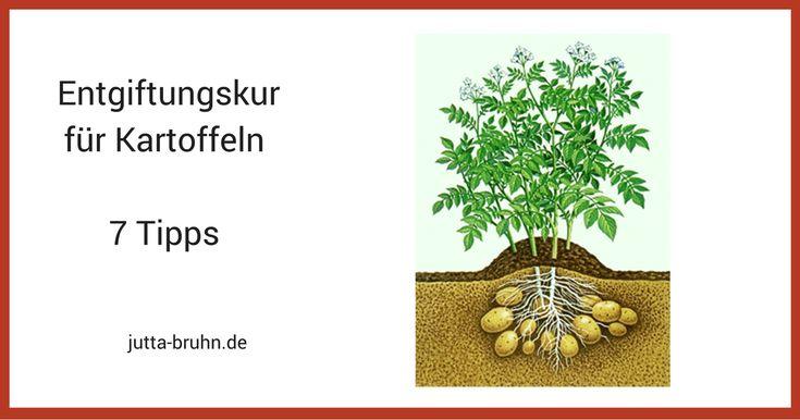 Kartoffeln sind Spitzenreiter in der Bio- und Gesundheits-Szene. Keiner scheint nach den negativen Auswirkungen von Kartoffeln zu fragen. Doch es gibt sie und ich werde Gründe nennen, warum ich die heiß geliebten Erdäpfel am liebsten in der Erde lasse. Es … Weiterlesen
