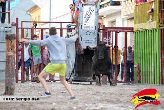 torodigital: Concluyen los festejos taurinos en Adzaneta