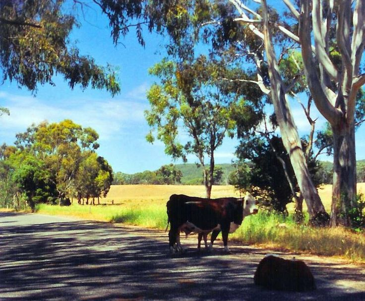 any grass on the Wangaratta Whitfield road? typical rural scene in Victoria Australia