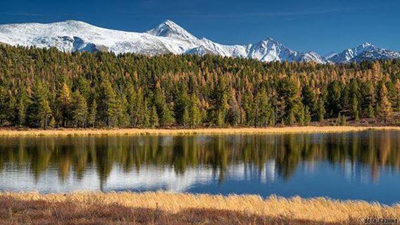 Sibirya'nın Mavi gözlü, Altay dağları (Orta Turan