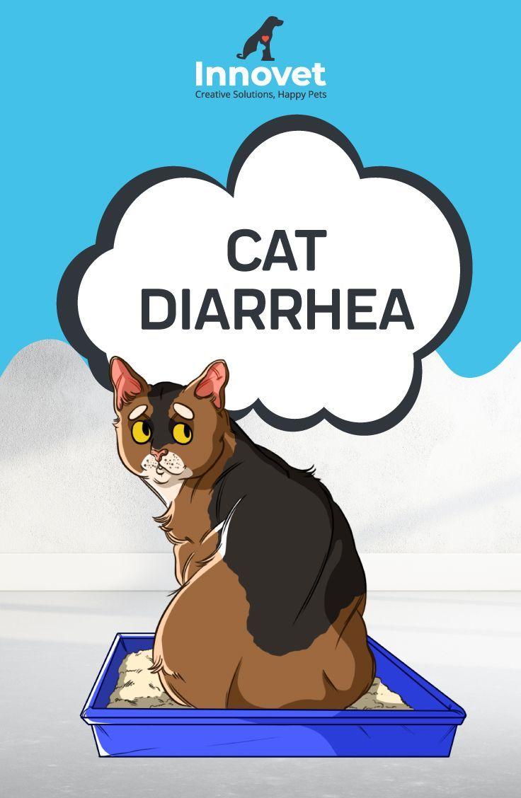 Cat Diarrhea With Images Cat Diarrhea Cats Cat Parenting