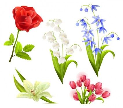 flowers flower beautiful 5 vector