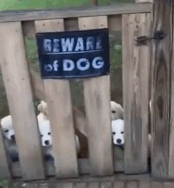 These vicious beasts, who won't let you escape with your life. | Beware Of These 19 Dogs, We Warned You