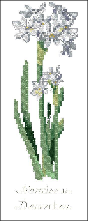 Нарцисс (декабрь)