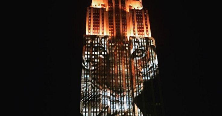 Ohrozené druhy zvierat premietli na Empire State Building. Pozrite si fotografie: http://www.dobrenoviny.sk/c/52479/ohrozene-druhy-zvierat-premietli-na-empire-state-building  #empirestatebuilding #animals #lightshow #zvieratá #tiger