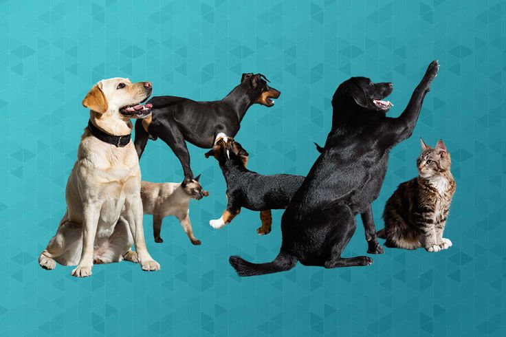 It's a well-known fact thateverything is better with puppies. Your renders are no different. Fortunately, the website Viz-peopleis here to help,...