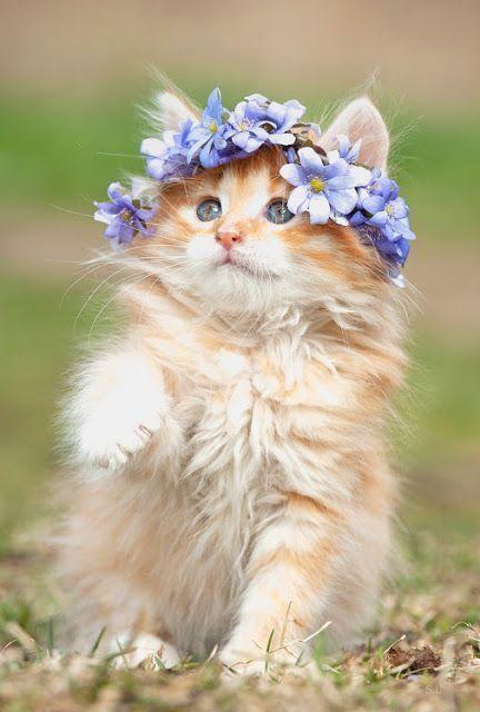 cute cat with flower crown ile ilgili görsel sonucu