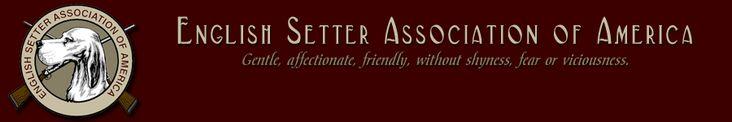 English Setter Association of America