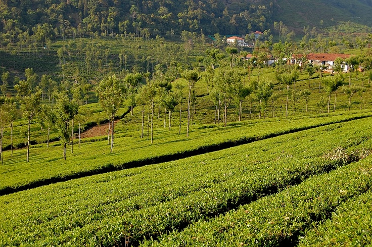 Ooty India - Ooty is a town, a municipality and the district capital of the Nilgiris district in the Indian state of Tamil Nadu.