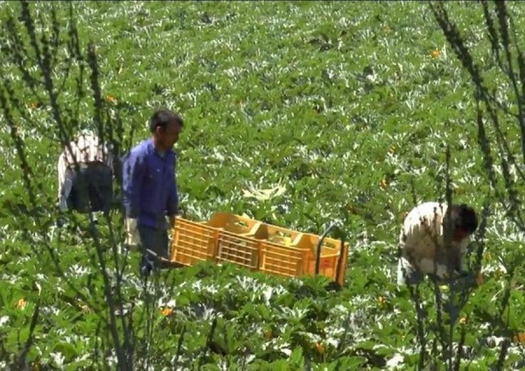 Puglia Criminalità – Emiliano a Minniti chieda anche sicurezza agricoltori