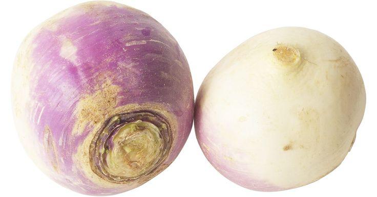 Como comer um nabo cru. Os nabos são vegetais de rais e foram plantados primeiramente na Virgínia em 1609. Eles foram usados como lanternas do Dia das Bruxas antes das abóboras. A parte da raiz pode ser comida crua e não é difícil de preparar. Uma xícara de nabos fatiados tem apenas 33 calorias. Os topos verdes são úteis como vegetais folhosos e são um acompanhamento ...