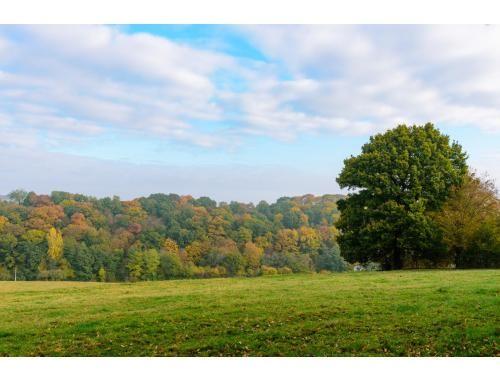 Terrain boisé à bâtir à vendre d'une superficie de 50 are 98 centiare. Grande surface constructible, façade 60 m. à la rue. Zone d'habitat à ca...