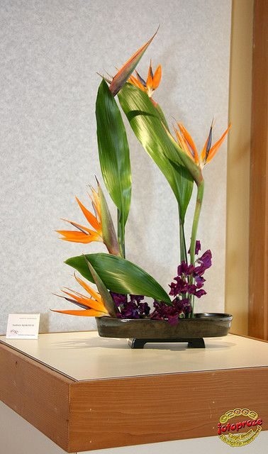 Rhapsody - Ikebana International Exhibition 2009 - Andrée Kordich - KORYU SHOTOKAI C20090425 050 | Flickr - Photo Sharing!