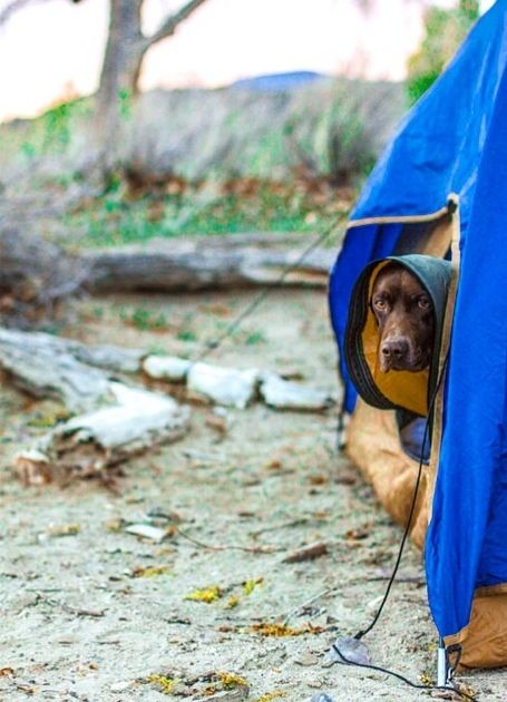 c&ing ideas c&ing tips c&ing food. & 12 best Tent Camping with Dogs images on Pinterest | Tent camping ...