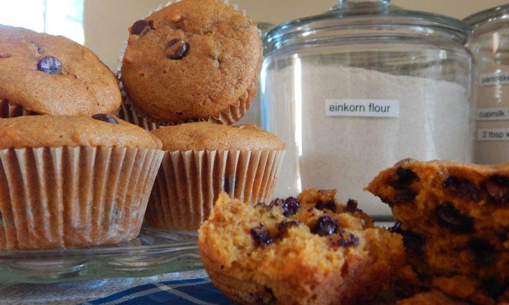 Pumpkin Chocolate Einkorn Muffins | Anita's Organic Mill